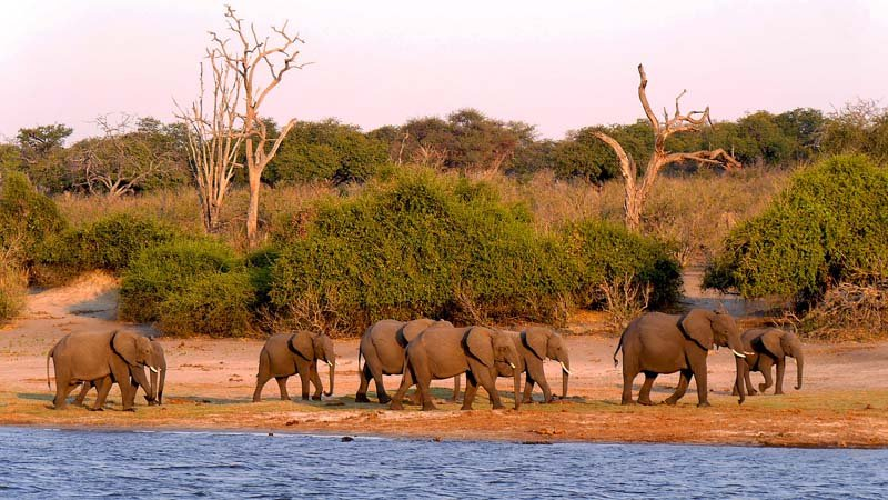 You Ll Be Amazed By The Elephants On A Chobe Safari Sand In My Suitcase
