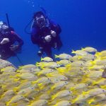 Scuba Diving in Cabo San Lucas: An underwater world of wonders