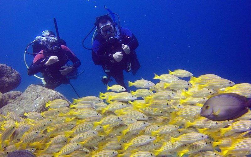 scuba diving Cabo San Lucas
