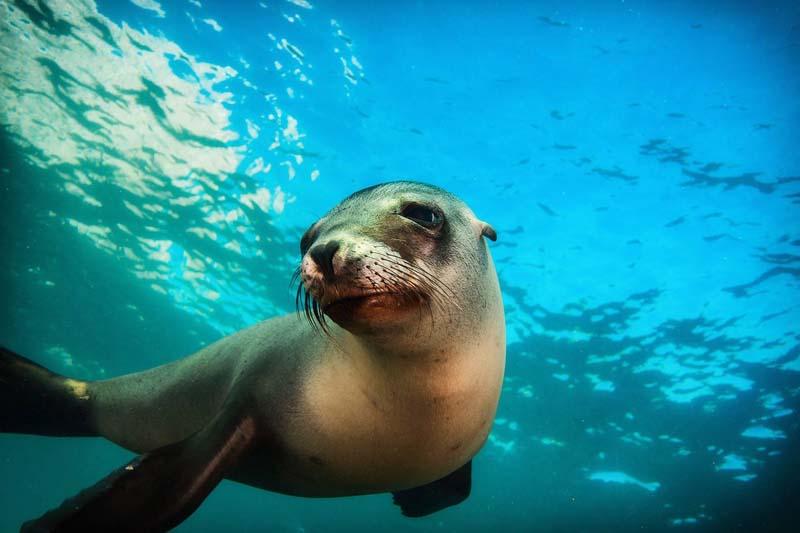 Playful sea lion seen when scuba diving in Cabo San Lucas