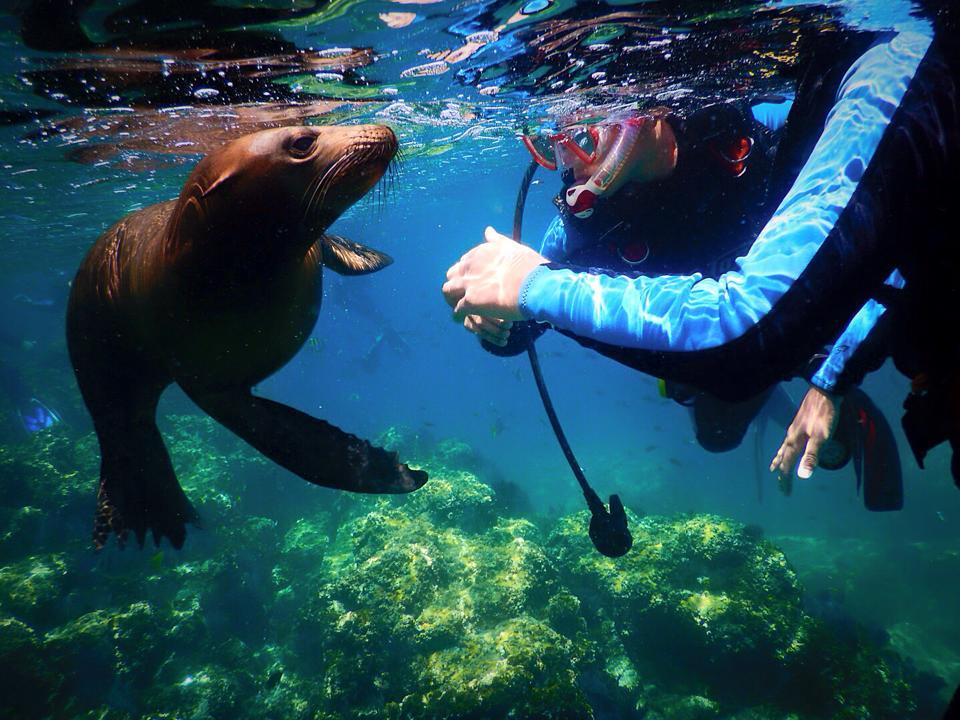 Scuba diving in Cabo San Lucas