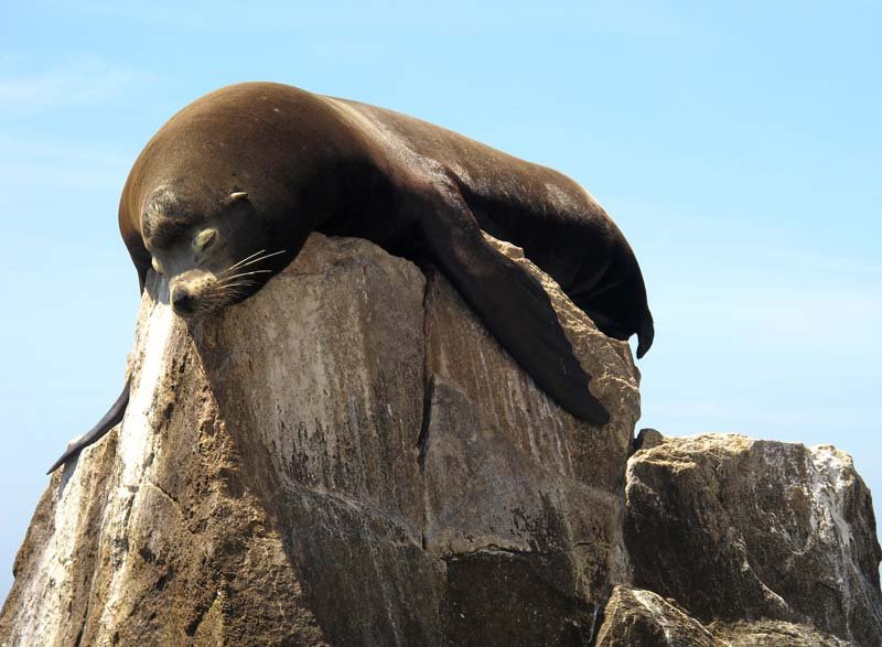 Take a Cabo water taxi to see sea lions at Land's End
