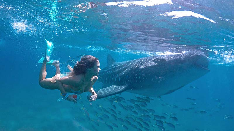 best things to do in Los Cabos - swim with whale sharks