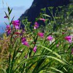 Take a hike! Levada walks on Madeira