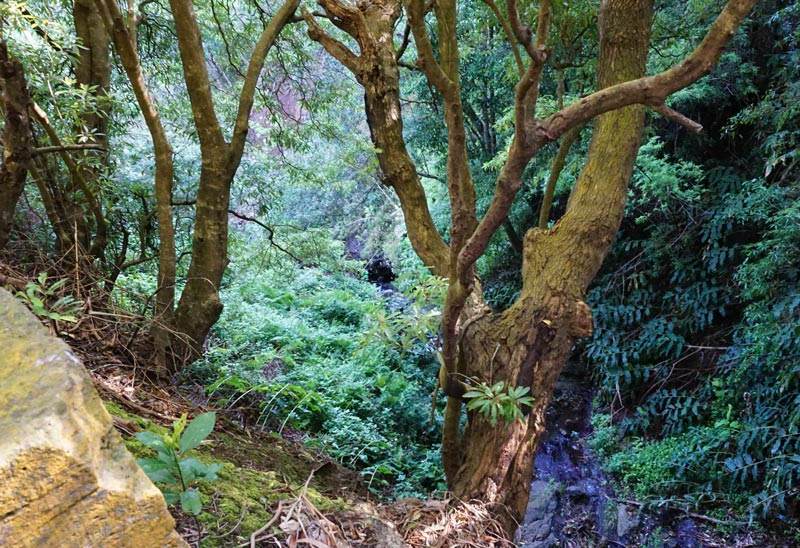 Many Madeira levada walks take you through magical forests and past charming villages.