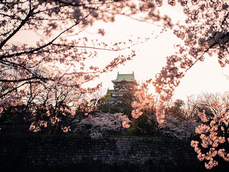 Cherry trees paint the sky pink outside Osaka Castle