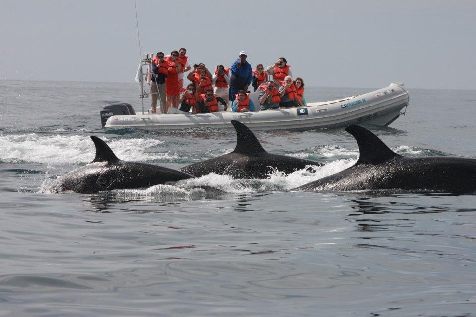 We also saw dolphins too on our last whale watching tour (Credit: Cabo Expeditions)