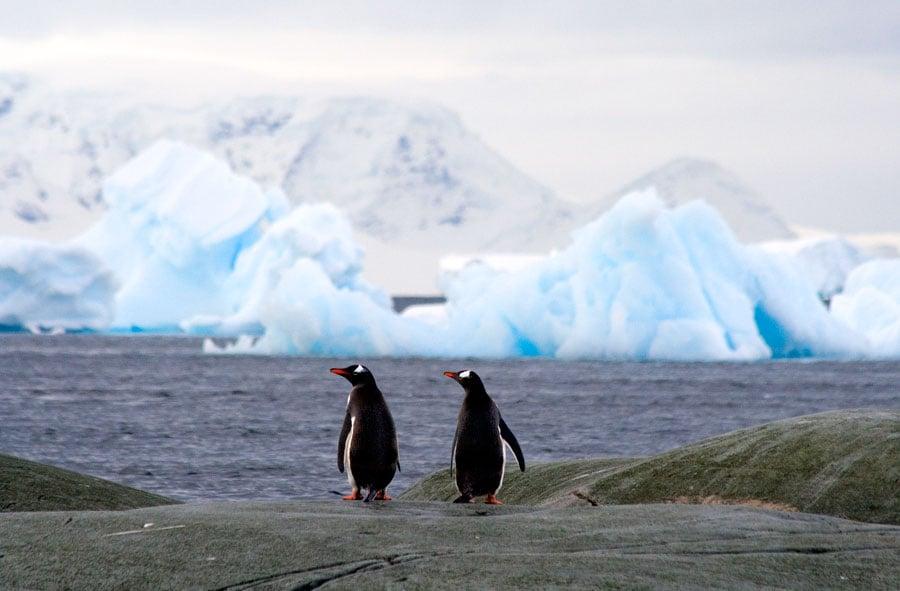 Cruising Antarctica