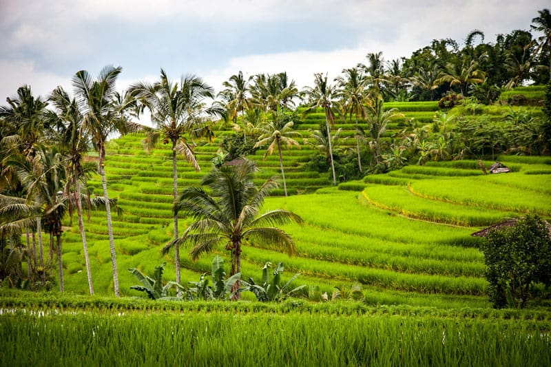 The Jatiluwih rice terraces in Bali are a UNESCO World Heritage Site