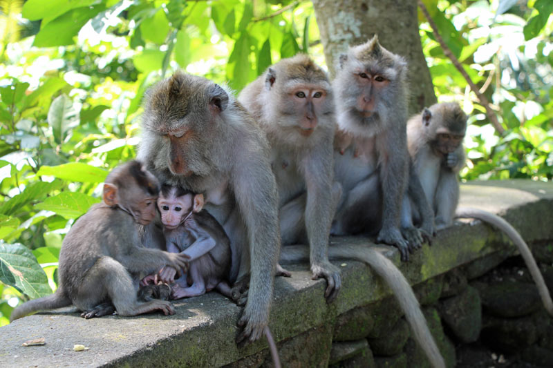 One of the top things to do in Bali? Visit the Ubud Monkey Forest