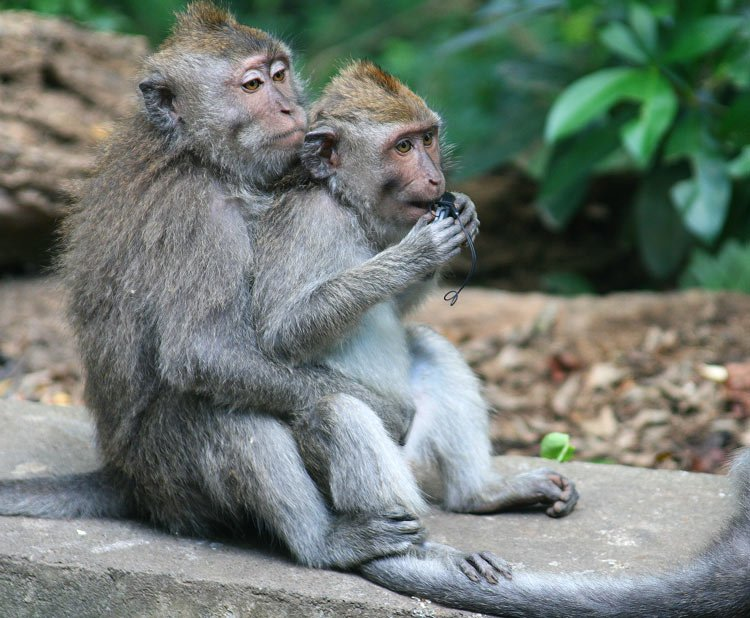 Monkeys at the Ubud Monkey Forest
