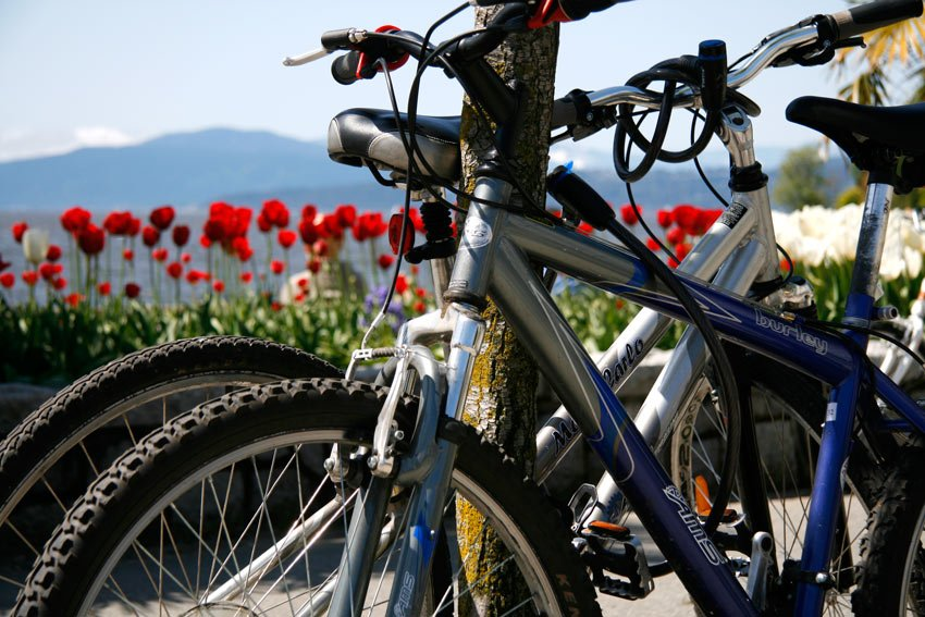 Stanley Park bicycle rentals