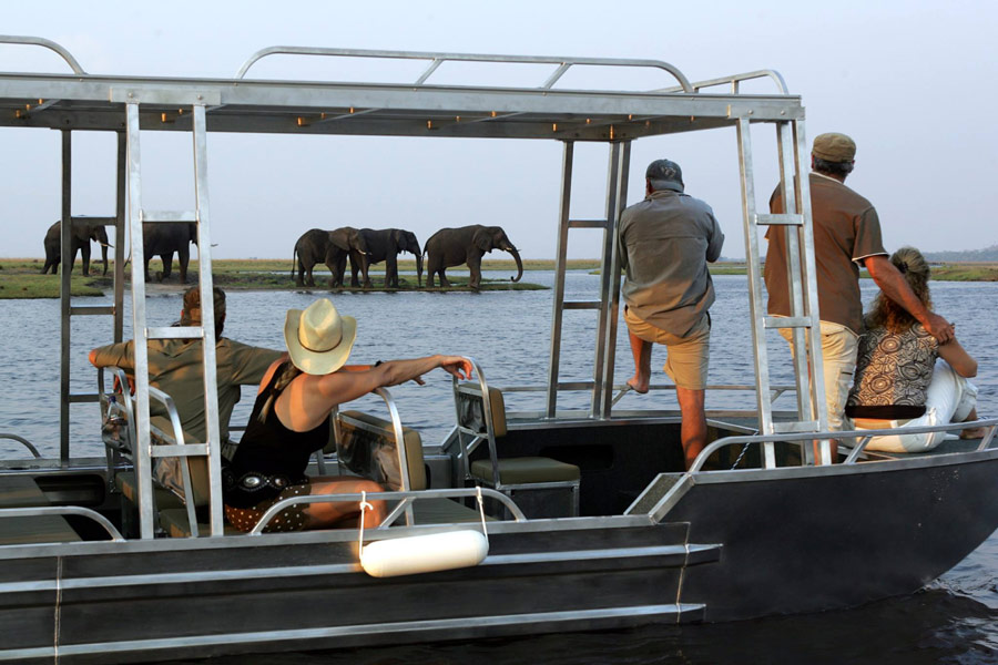 You see so many elephants in Chobe National Park!
