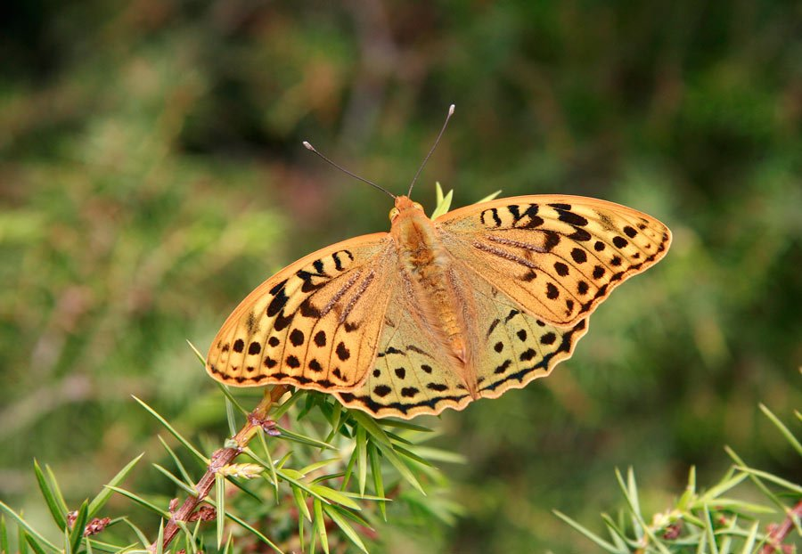 A butterfly on our Cappadocia hike