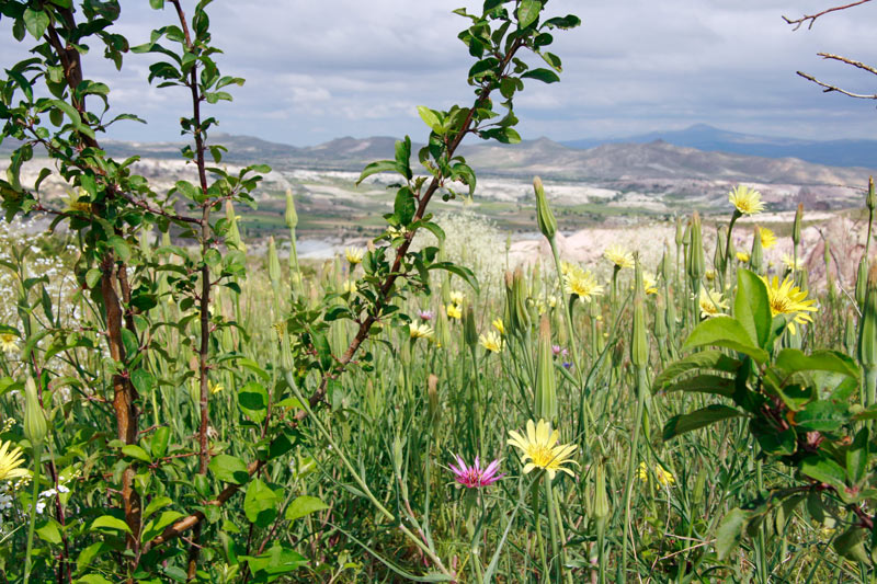 Hiking Rose Valley isn't all about the rippling red rocks - the wildflowers are beautiful too