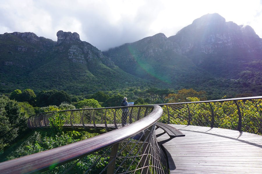 "One of the highlights in the Kirstenbosch Gardens is the ""Boomslang"" walkway high above the tree tops"