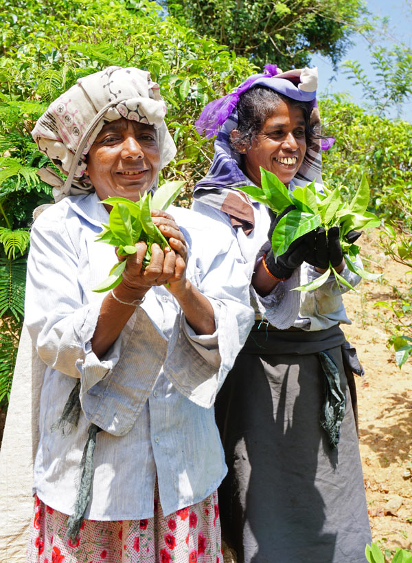Sri Lanka is famous for its tea; tea pickers at the Geragama Tea Factory show us what they've plucked.