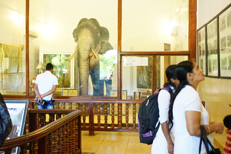 The Raja Museum chronicles the life of the elephant who carried the casket of the tooth relic for Kandy's annual Festival of the Tooth procession.