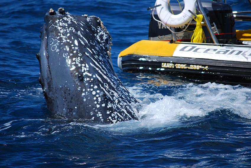Ocean Riders is a good whale watching tour operator in Los Cabos