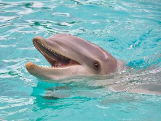 Dolphin Swim in Cabo