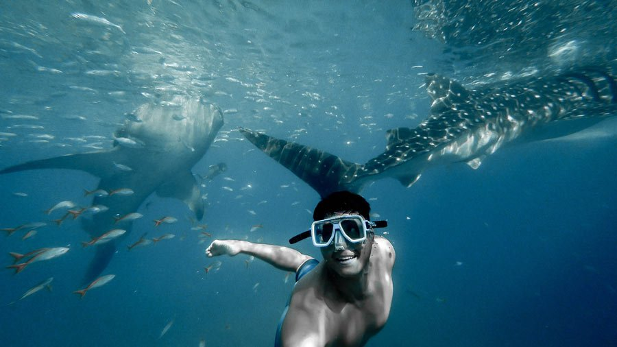 Swimming with whale sharks at Isla Holbox is one of the best Riviera Maya excursions!