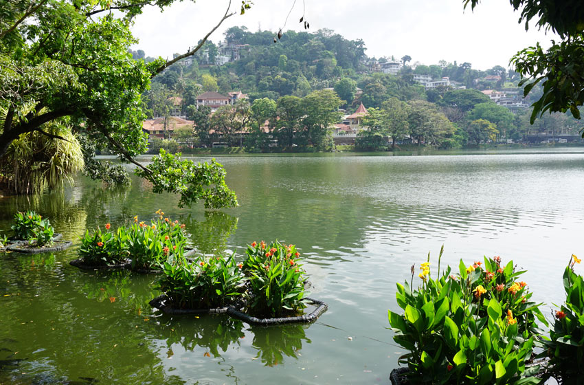 The best part of the walk around Kandy Lake is the section in front of the Temple of the Tooth.