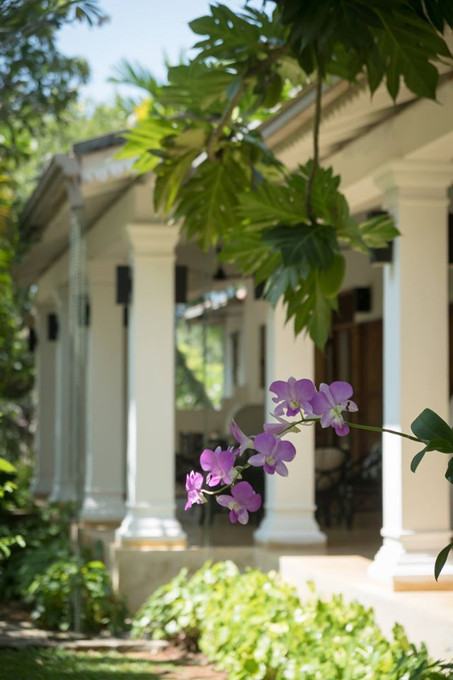 Lush gardens, whirring overhead fans and porches supported by columns - you feel like you've stepped onto a colonial British movie set at the Why House.
