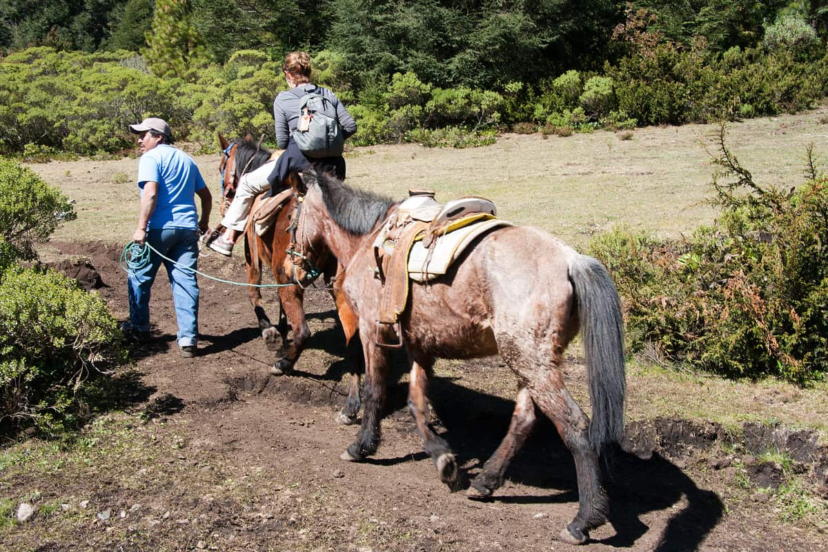 You can hike up to the Sierra Chincua butterfly sanctuary - or ride a horse (fun!)