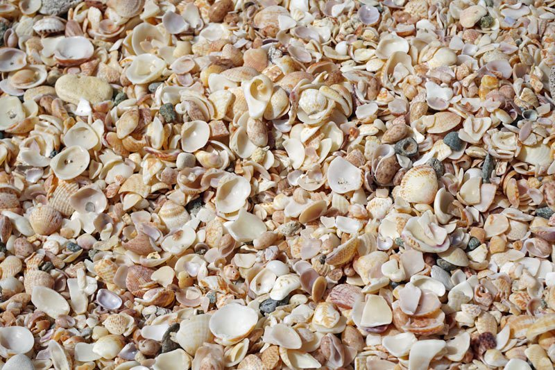 Millions of tiny shells make up Shell Beach on St. Barts.
