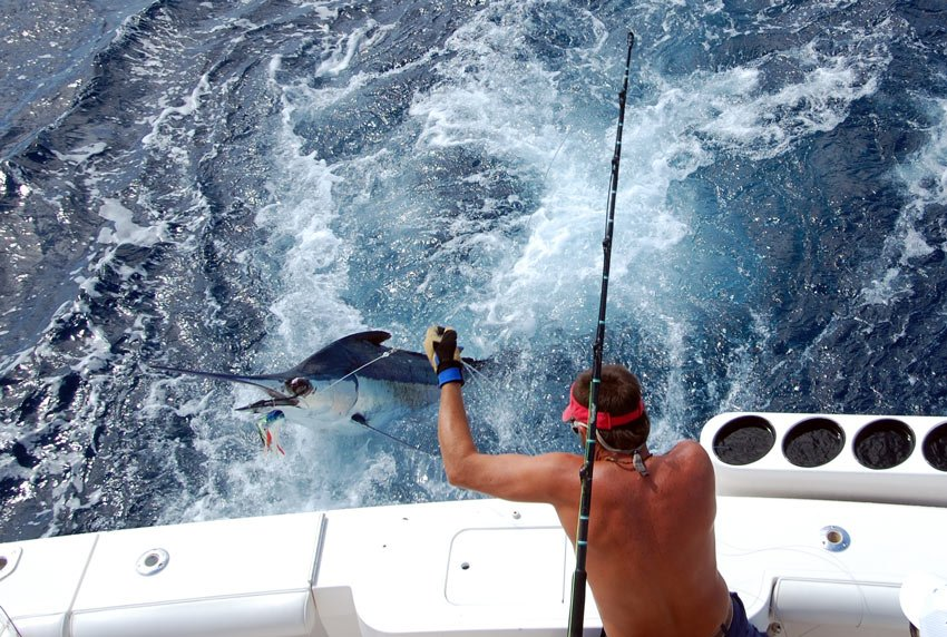 Every October, Cabo hosts the world's richest fishing tournament, the Bisbee Black and Blue.