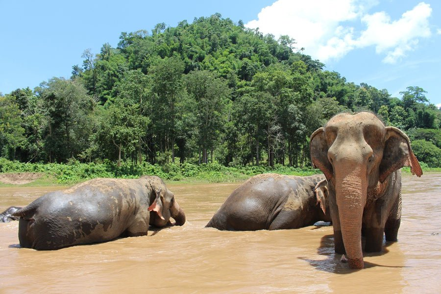 Chiang Mai is home to several ethical elephant sanctuaries.