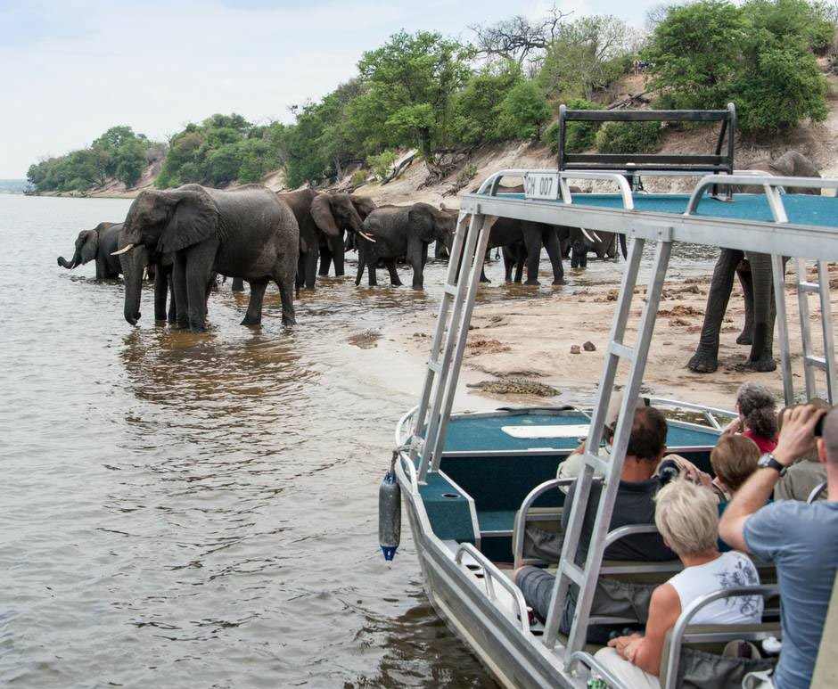 On a Zambezi Queen river cruise, the ellie and hippo viewing is nothing short of amazing.