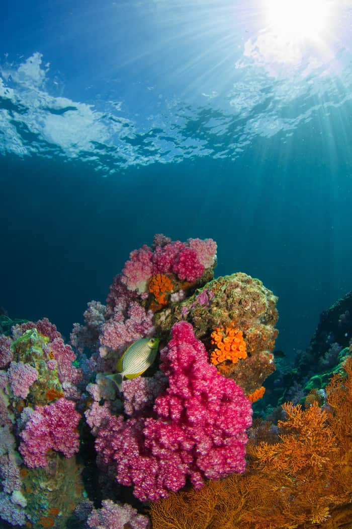 Scuba diving is popular in the waters around Koh Lanta, Thailand.