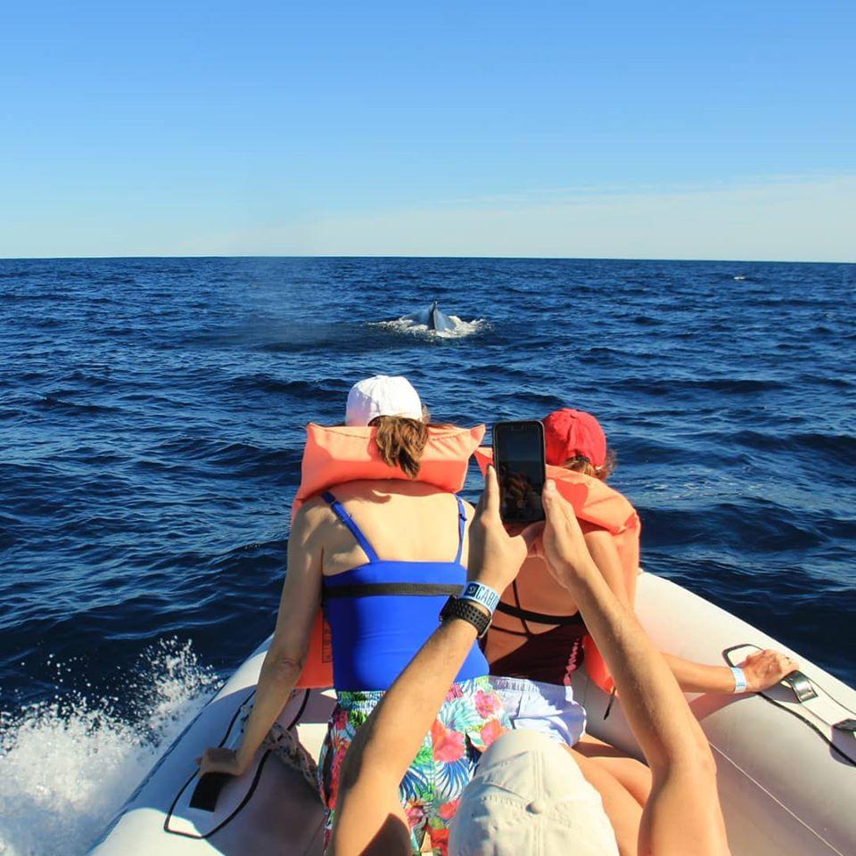 Whale watching is one of the top things to do in Cabo between mid-December and early April.