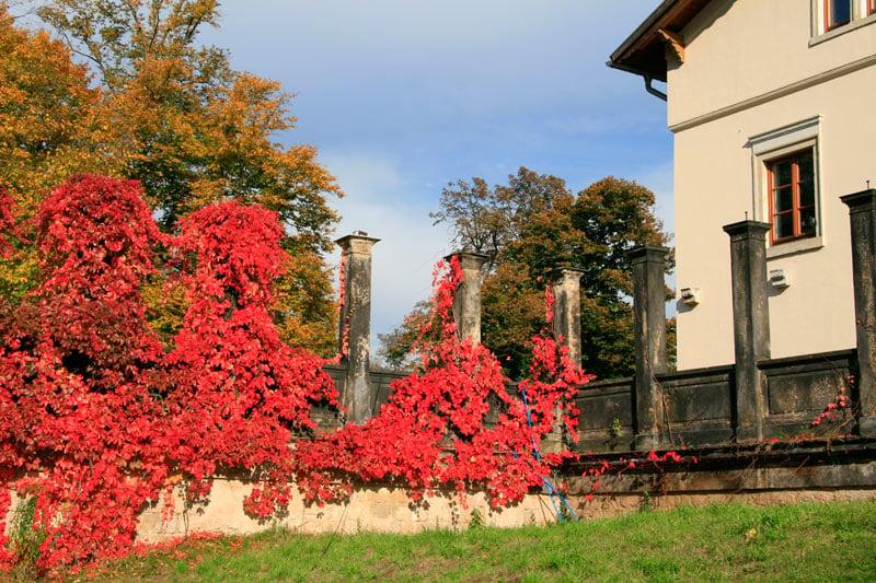 Autumn leaves outside Dresden