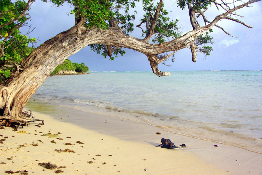 Guadeloupe's pristine Grand Anse Beach: The water is crystal clear and the sand a beautiful golden color