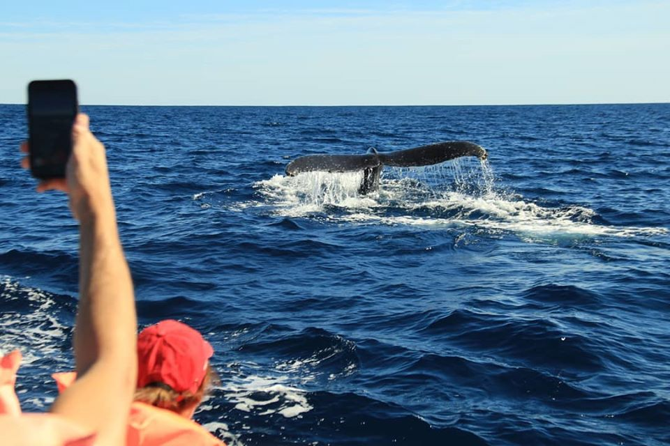 Up close-and-personal whale watching in Cabo San Lucas!