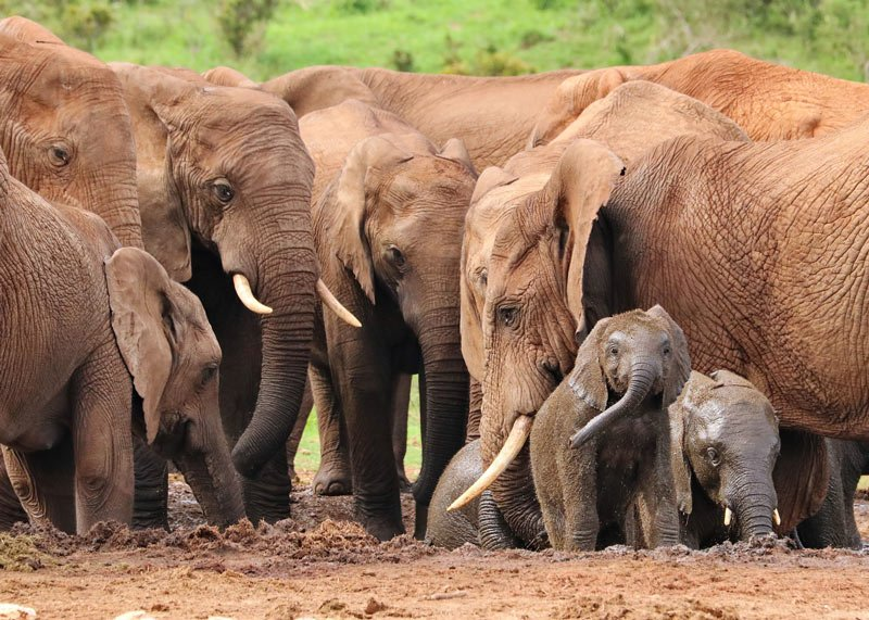 Elephants are the stars in Chobe National Park.