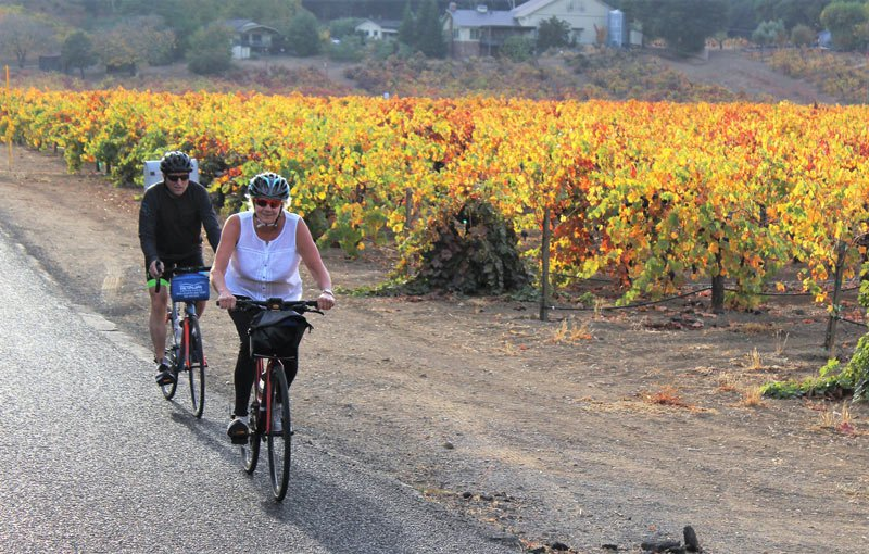 Guests cycle with Getaway Adventures in the Sonoma vineyards