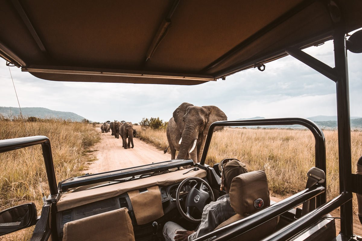 South Africa is a great place to go on safari