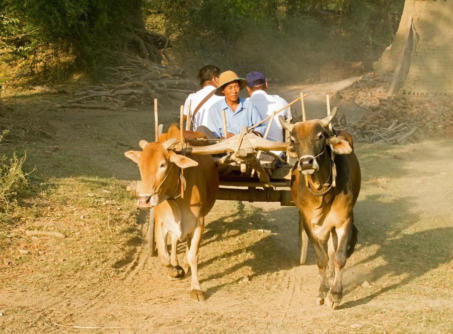 Ox cart in Myanmar