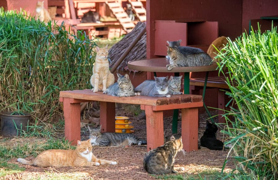 Cats at the Lanai Cat Sanctuary