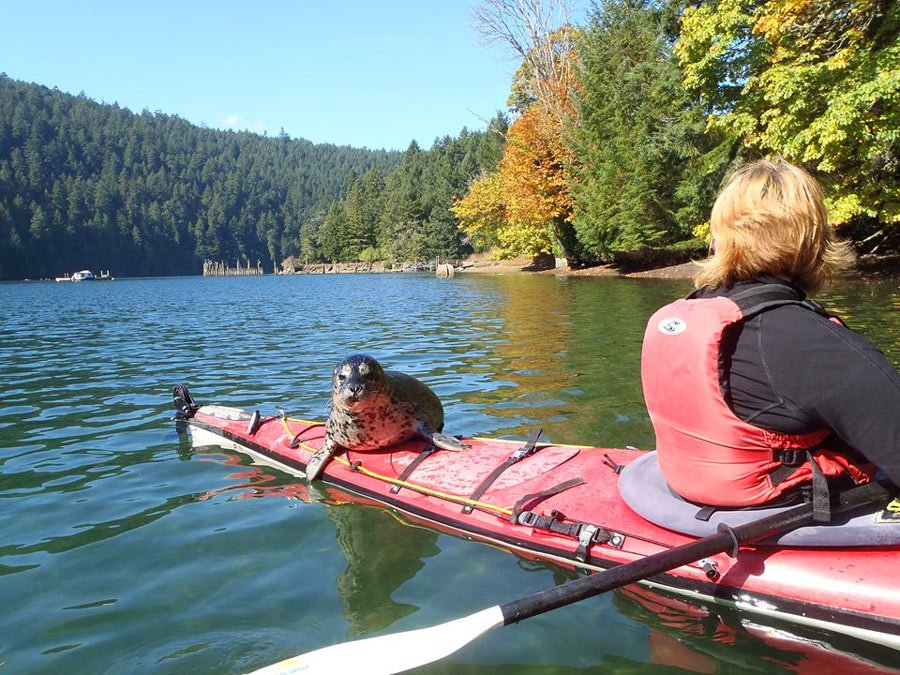 What to do in Victoria, BC? Go kayaking in Tod Inlet!