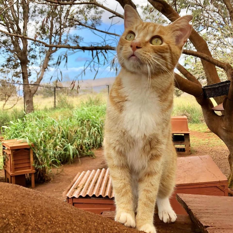 Visiting the Lanai Cat Sanctuary is one of the feel-good Lanai activities!