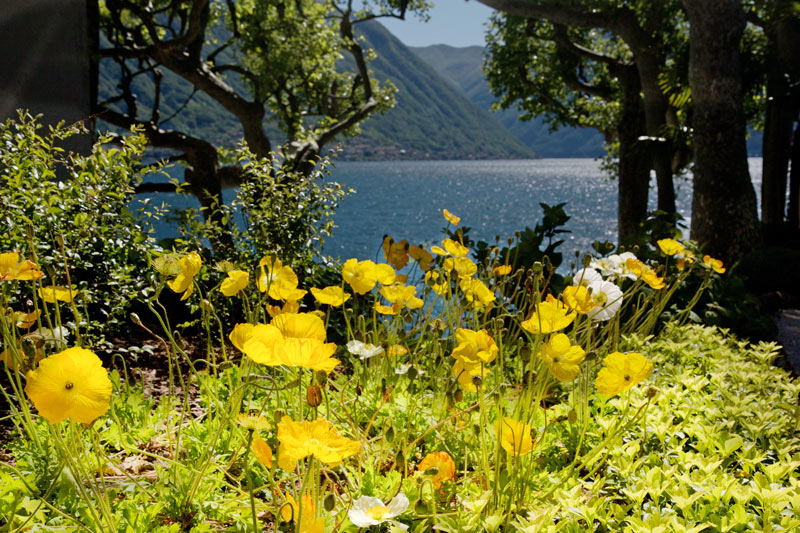 Flowers bloom at Lake Como, one of the best places to visit in Italy.