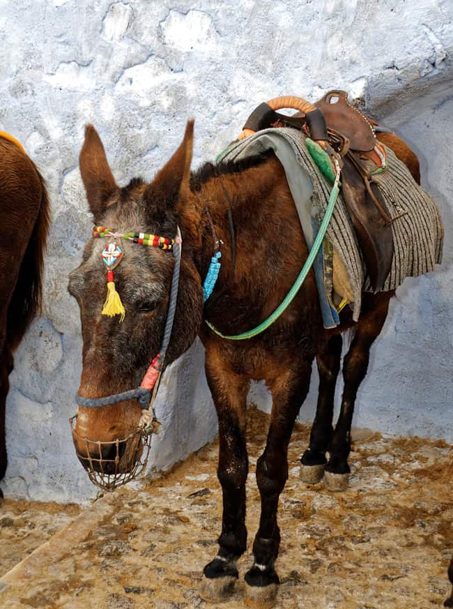 Donkey taxis are used in Santorini.