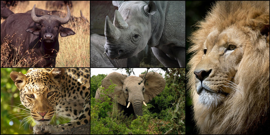 Big 5 Animals
