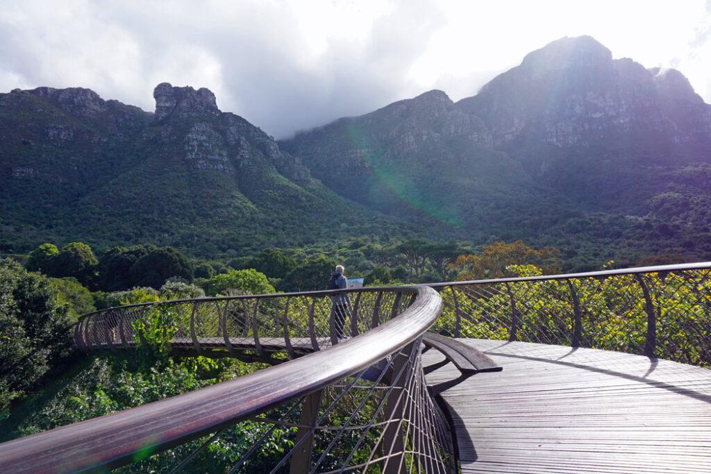 The Kirstenbosch Gardens' Boomslang tree canopy walkway