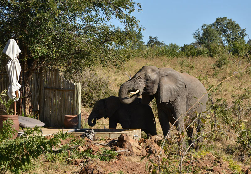Elephants sometimes drink right from the pool of your chalet at Ngoma Safari Lodge, Chobe National Park.