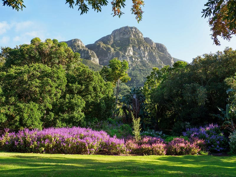 Kirstenbosch National Botanic Gardens are regarded as one of the best botanical gardens in the world.